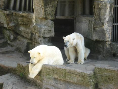 polar bears by justta