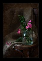 Kalanchoe by An-gora