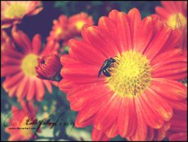 bee on the flower by Cold-Feelings