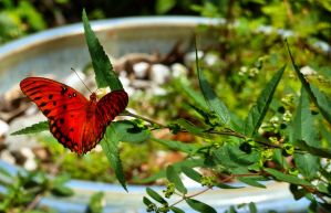 Red Butterfly by crudinski