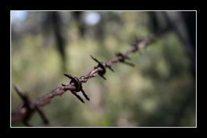 Barbed Wire by Leukeh