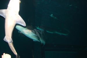 Sharks 5 by Ozzyhelter