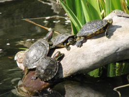 Turtles by LuLove