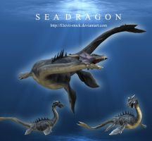 Sea Dragon by Elevit-Stock