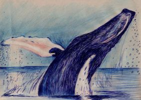 Mighty Humpback by philippeL