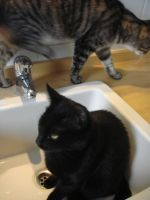 Cats invaded my bathroom 2 by SilverQuill