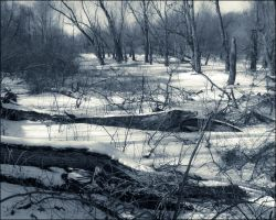 Winter Swamp by bamako