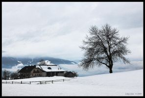 White winter by Lidija-Lolic