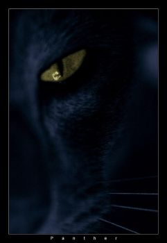 Panther by sickeningpessimist