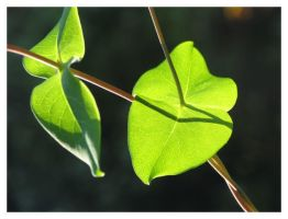 Leaves... by ccordovez