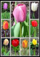 Tulips by PaSt1978