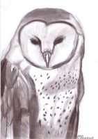 Barn Owl by SchizophrenicUnicorn