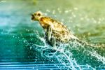 Running on Water by askine