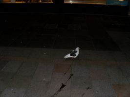 The Night Pigeon by SaveTheCRT