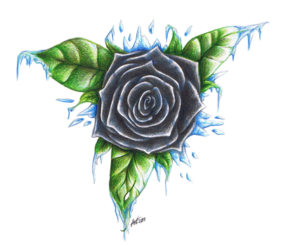 Black and Icy Rose by Zuschke