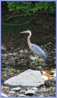 Heron Profile by raistlin306