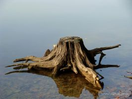 water tree by niwaj