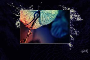 Unnamed Wallpaper 1 by eyefish