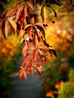 +Fall is comming+ by Dra-Matha