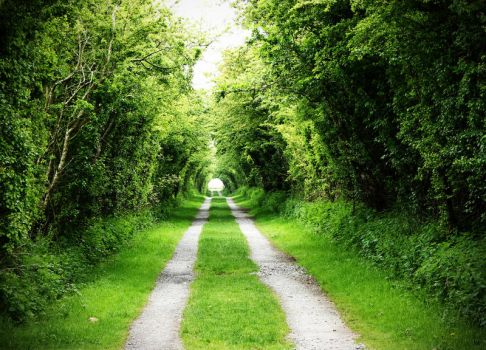 TUNNEL OF TREES by BlonderMoment