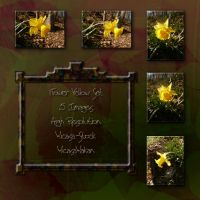 Flower yellow set wicasa-stock by Wicasa-stock