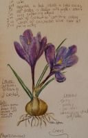 Observations of a Crocus by TessaLouise