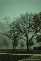 A Misty Morning: The Trees by ddsk1191