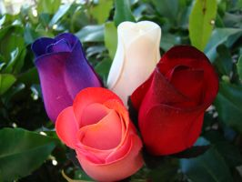Wooden Roses by stephuhnoids