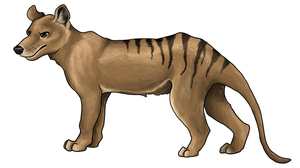 Thylacine by painted-flamingo