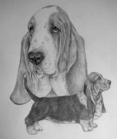 The Basset Hound by xx-ashley