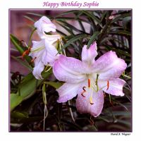 """Happy Birthday Sophie"" by David-A-Wagner"