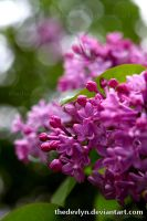Parking Lot Lilacs by TheDevlyn