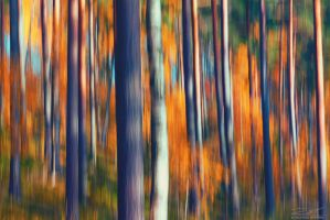 Colours of Fall by RoniLeppanen