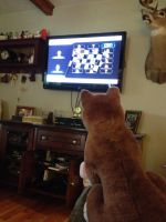 Balto playing Mario by TwinTowergal