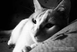 Tommy 2-23-11 by HadesDiosSupremo