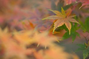Autumn leaves 23 by TheEtherealSoul