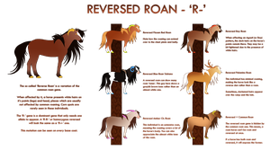 | Reversed Roan Mutation | by Enharmonia