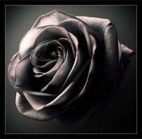 Dark Rose by digitaldreamz666