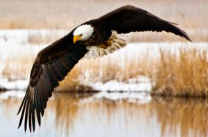 Farmington Eagle 11 by miniwyo