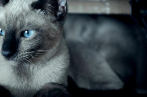 A very beautiful cat picture by ONE-Photographie
