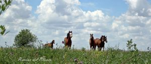 Clouds and horses by Romydb