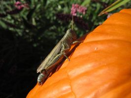 the Grasshopper in Fall by artjte