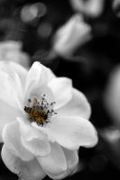 Busy Bee by H4henry