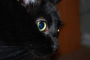 Stock cat's face by ellemacstock