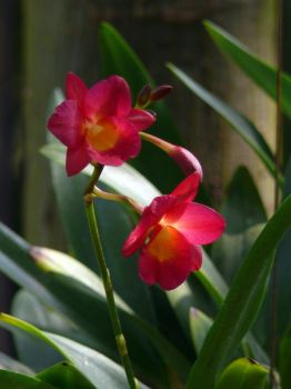 My orchid35 by Otoff