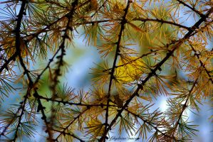 Needles and leaves by gigi50