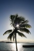 Tree and sun by totallehmaddeh
