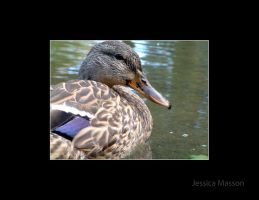 Ducky by TheBug