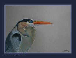 Great Blue Heron III by AriesCT