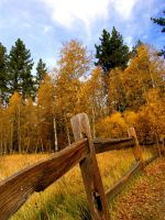 Fall Fence by Caitiekabob